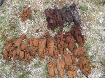uitgelegde boring van een veldpodsol op de Gorsselse Heide