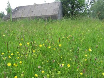 soortenrijk grasland met Goudhaver op fort de Gagel (Utrecht)